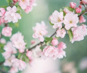 spring, easter, and flowers image