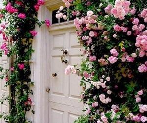 beautiful, door, and garden image