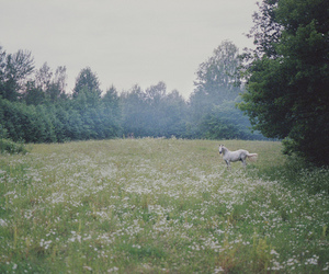 film, fields, and horse image