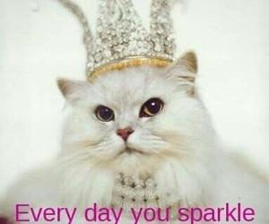 birthday, happy, and cat image