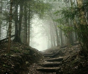 forest, free, and nature image