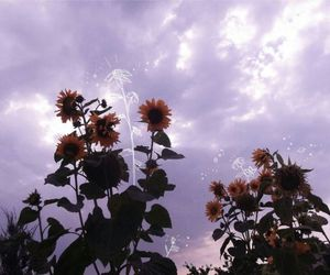 flowers, sky, and tumblr image