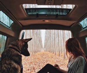 dog, nature, and car image