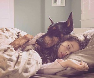 doberman, kind, and sleep image
