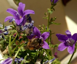bee, flowers, and myphoto image