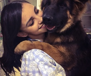 animal, german shepperd, and happy image