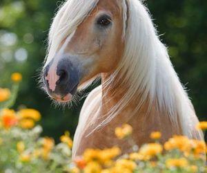 caballos image