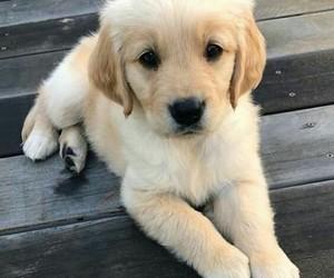 animal, puppy, and dog image