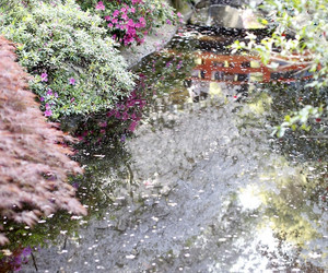 garden, print, and interior image