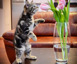 animals, flowers, and cat image