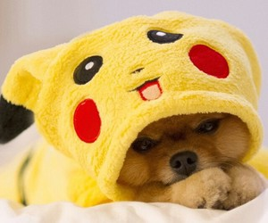 dog, cute, and pikachu image
