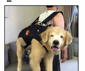 dog and viaje image