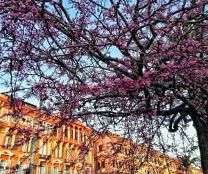 city, spring, and tree image
