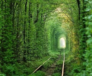 green, forest, and train image