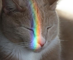 animals, cat, and rainbow image
