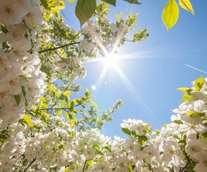 flowers, spring, and sun image