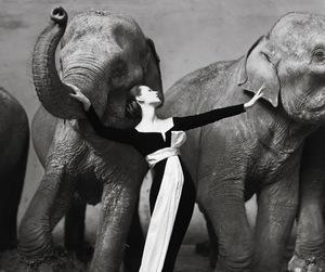 elephant, richard avedon, and black and white image