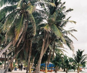 beach, mexico, and palm trees image