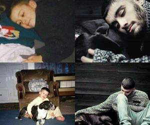 zayn, dog, and one direction image