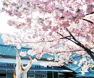 cherry blossom, flowers, and girl image