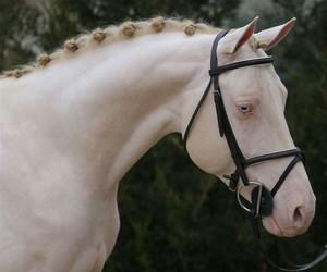 black, unique, and horse image
