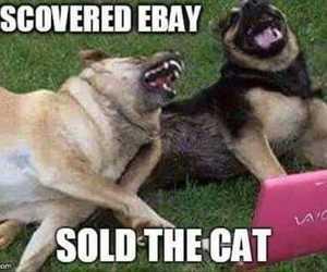 dog, cat, and ebay image