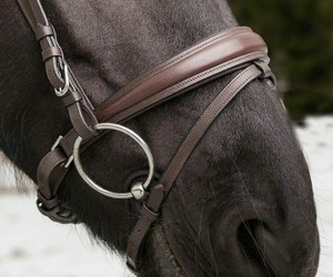 bridle, details, and horse image