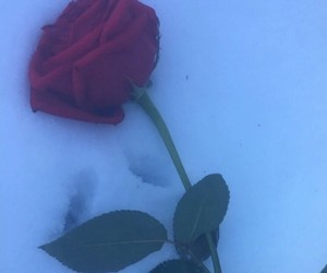 aesthetic, rose, and snow image