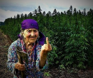 weed, funny, and nature image