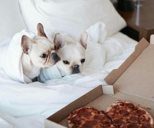 and, pizza, and animals image