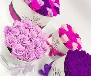 colorful, gift, and pink image