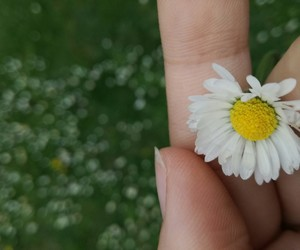 april, nature, and flower image