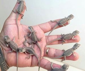 animal, baby, and lizard image