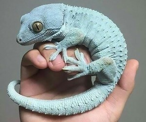 blue, cute, and gecko image