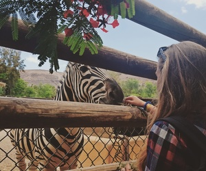 animal, vacation, and zebra image