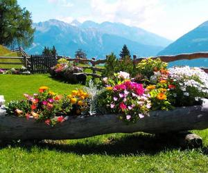 countryside, flowers, and rustic image