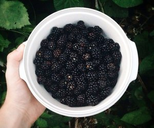 berries, blackberry, and food image