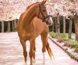 horse, animal, and spring image