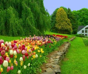 beautiful, plant, and flowers image