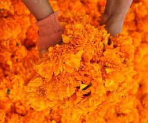 flowers, marigold, and orange image