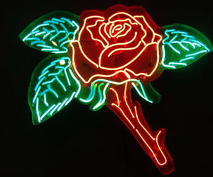 blue, rose, and neon image