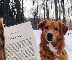 book, dog, and expecto patronum image