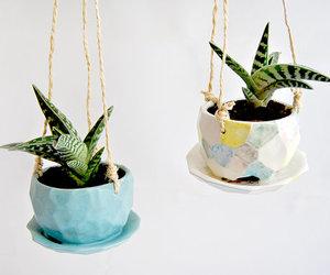 plant, plants, and succulents image