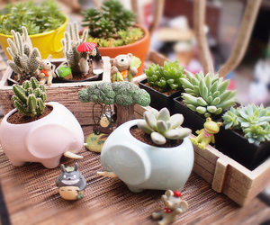 plant, plants, and succulent image