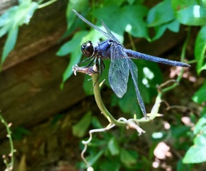 adventure, maryland, and dragon fly image