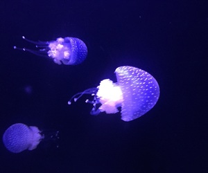 fluorescent, jellyfish, and lisbon image