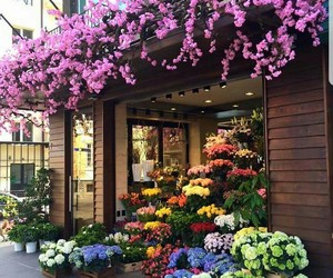 color, flowers, and inspiration image