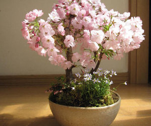 cherry blossom, pink, and pretty image