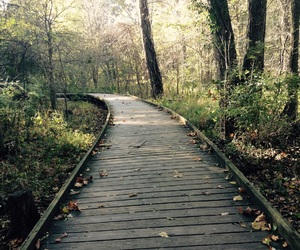 autumn, boardwalk, and fall image