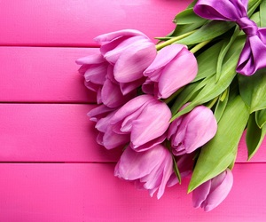 tulips and pink image